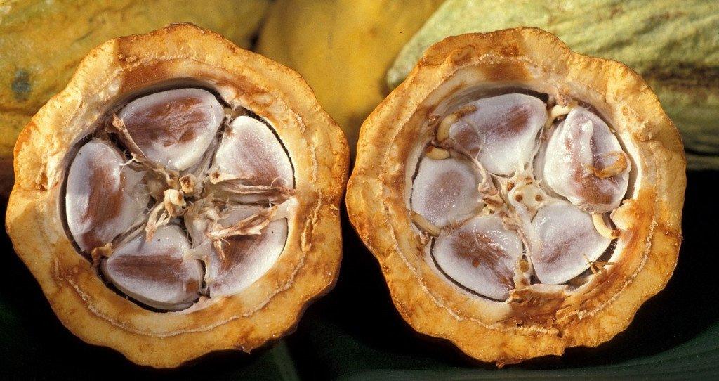 Antigua Guatemala : cacao ©skeeze