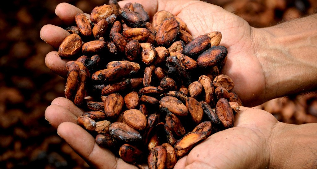 Antigua Guatemala : fèves de cacao grillées ©David Greenwood-Haigh