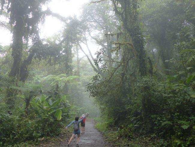 La forêt nuageuse de Monteverde