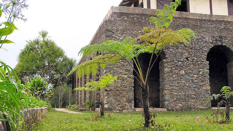 plantation café la isabelica