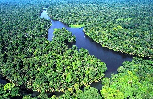 Les canaux du Tortuguero sont un habitat naturel pour de nombreuses espèces